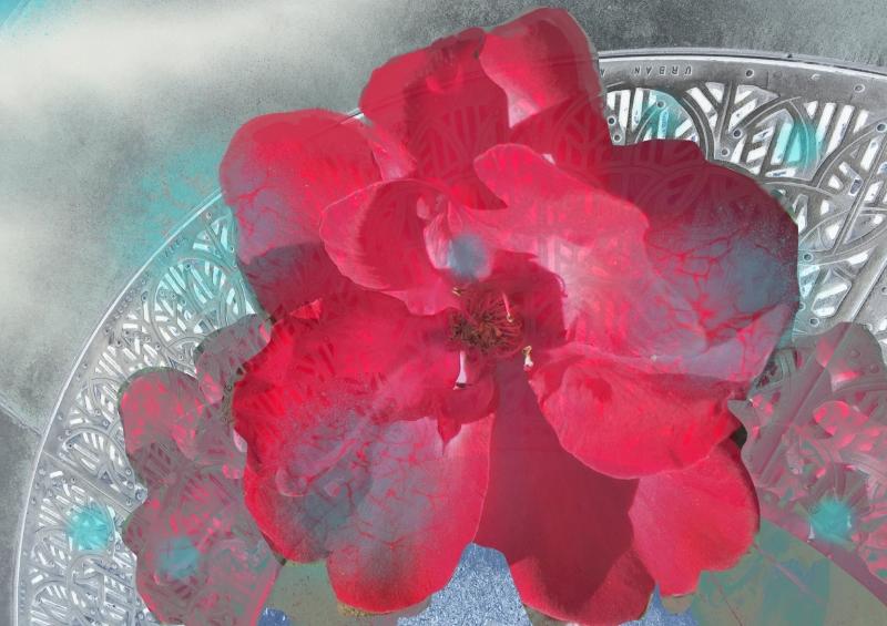 Red Flower - Irvine Spectrum